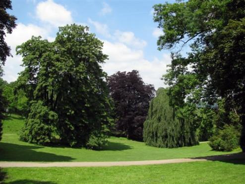 Bäume - Obere Barmer Anlagen