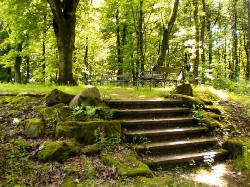 Paulinen Ruhe - Wald - Obere Barmer Anlagen