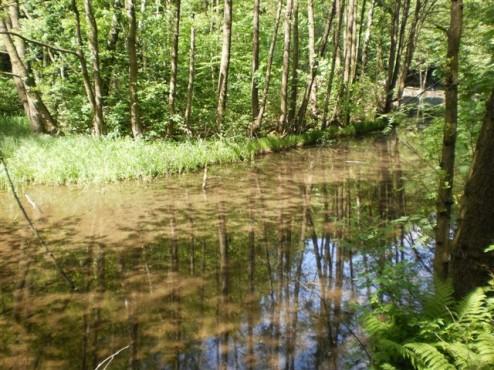 Naturschutzgebiet Murmelbachtal