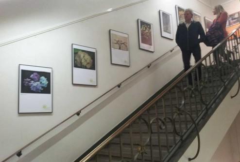 Ausstellung - Das Georg Arends Museum für Gartenkultur